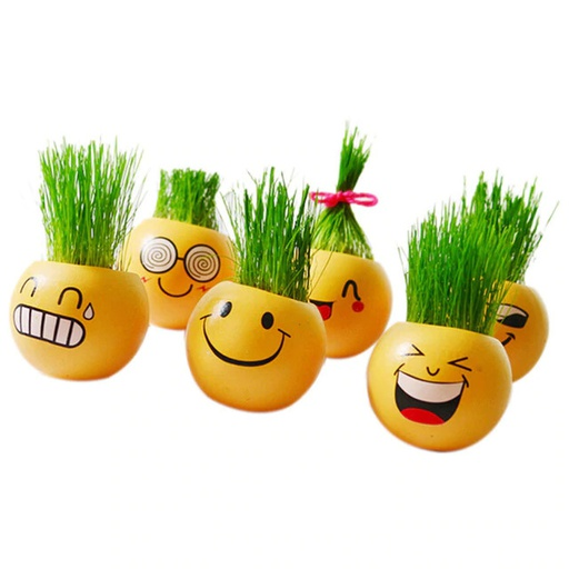 [Hl0137] 2 Pcs Smiley Plant